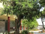 Αρχαιολογικό Μουσείο Ηρακλείου Archaeological Museum Heraklion