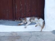 Agios Nikolaos Chalkidiki - Άγιος Νικόλαος Χαλκιδική